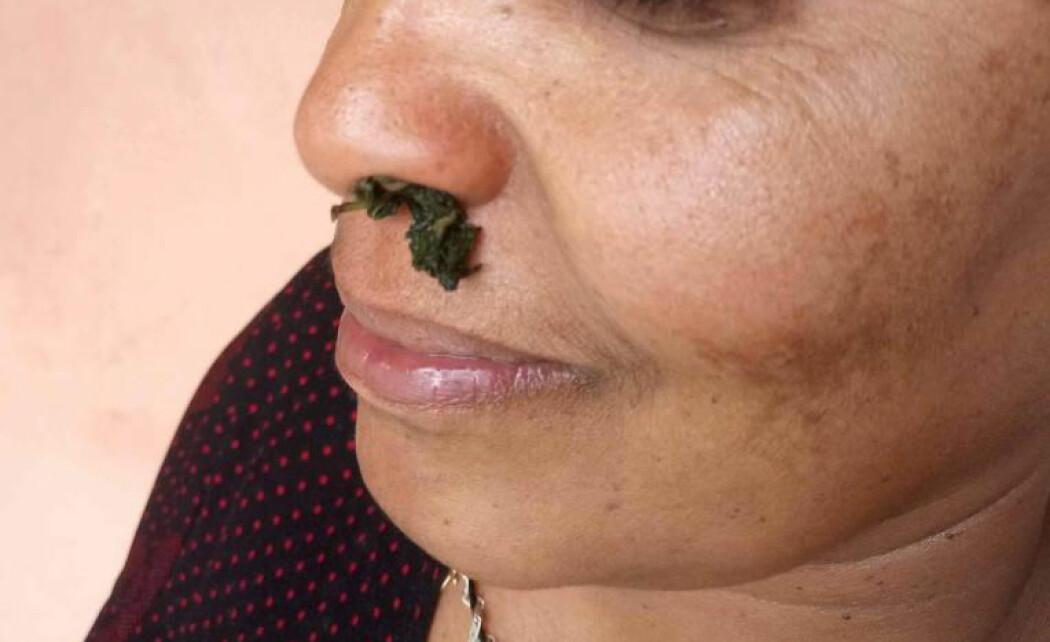Bladene i etiopisk basilikum brukes ved at saften presses ned i en kopp kaffe, eller de pressede bladene kan brukes i nesen. (Foto: Selamawit Seid Nega)