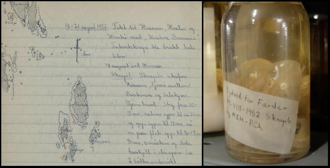 Disse kappedyrene av arten Ascidia conchilega ble funnet ved Færder i 1952. Og de holder seg godt. Til venstre beskrivelsen fra dagboka. (Foto: Eivind Torgersen)