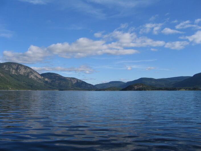 Fyresvatnet er en av de sørligste innsjøene i Skandinavia som har bestander av røye, ørret og sik i samme innsjø. Ny forskning viser at fiskeartene i Fyresvatnet har hver sin favorittnæring og hver sine foretrukne beitemarker. (Foto: Hallvard Jensen, NIBIO)