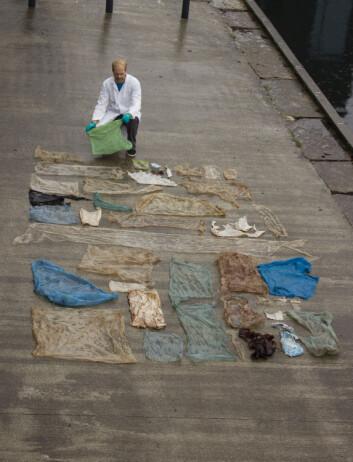 30 plastposer lå inni magesekken til gåsenebbhvalen som måtte avlives på Sotra (Foto: Henrik Glenner / UiB / NTB scanpix)