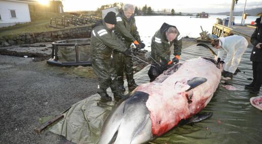 Debattinnlegg: Klærne våre dreper liv i havet