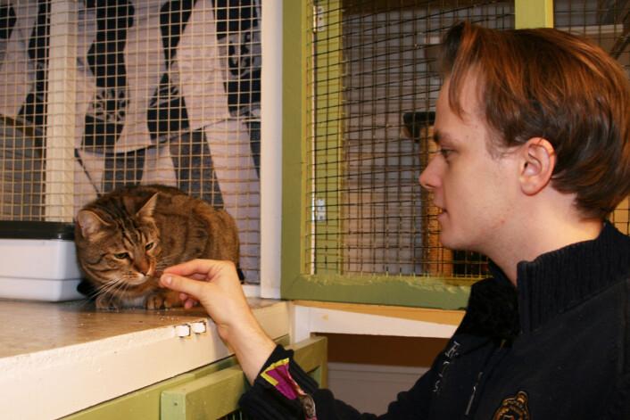 Daniel Sommer på FOD-kattehuset bruker en godbit i arbeidet med å sosialisere Tigergutt, som ifølge Sommer er en toåring som liker både mennesker og hund, og selvsagt et nytt hjem. Foto: Janne Karin Brodin