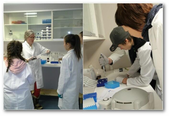 Fra Forskerlaben på Svanhovd, hvor det er bygget et eget laboratorium for elevene. Foto: NIBIO Svanhovd