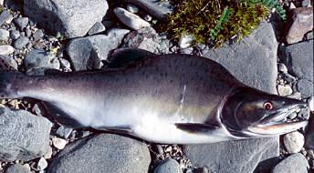Vannprøver avslører fremmed fisk
