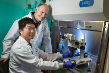 Forskerne bak studien – professor Juan Carlos Izpisua Belmonte sammen med førsteamanuensis Jun Wu fra Salk Institute i La Jolla, USA. (Foto: Dr. Belmonte/Cell)