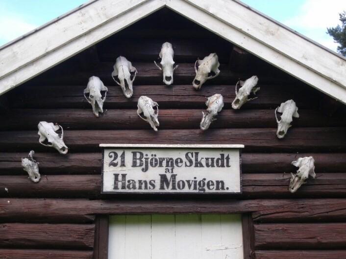 Bjørneskaller på stabbursveggen. Movika, Krødsherad. Foto: Finn Audun Grøndahl
