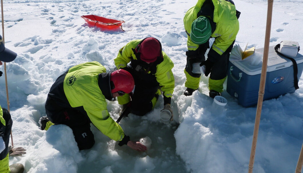 Her samler forskere sammen plankton som har vokst fram under havisen.  (Foto: Mar Fernandez-Mendez / Norsk Polarinstitutt)