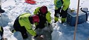 Mikroskopisk alge kan være dårlig nytt for Arktis