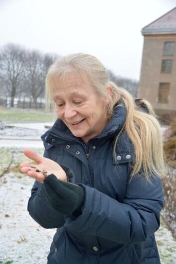 Kristina Bjureke med klintefrø. (Foto: Guri Haram)