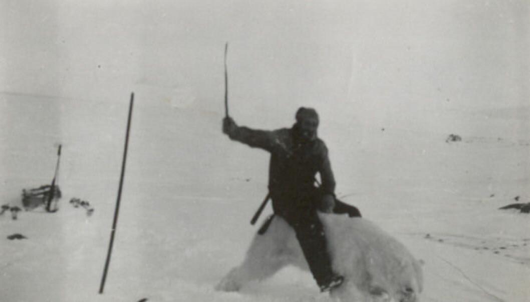 Henry Rudi var kjent som «Isbjørnkongen». Her poserer han på en stivfrossen isbjørn. (Foto: Norges arktiske universitetsmuseum)
