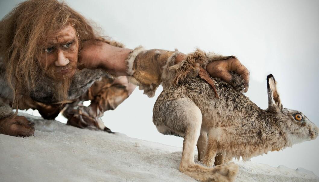 Neandertalere spiste også harer, viser nye analyser. (Foto: Dieter Hawlan / Shutterstock / NTB scanpix)