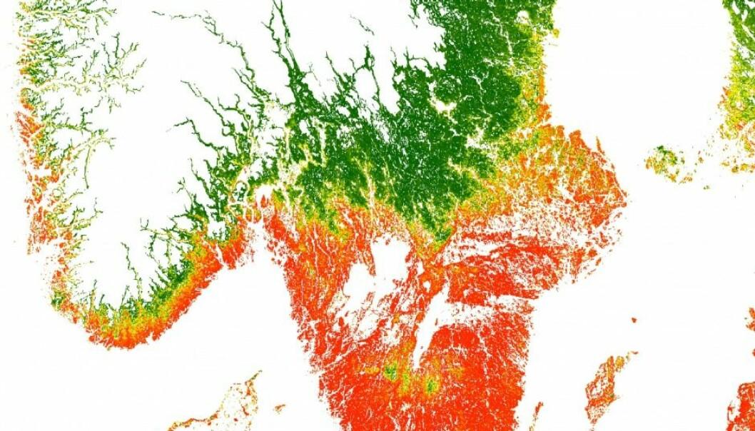 Første kart over flått i Skandinavia: Blodsugerne flytter nordover