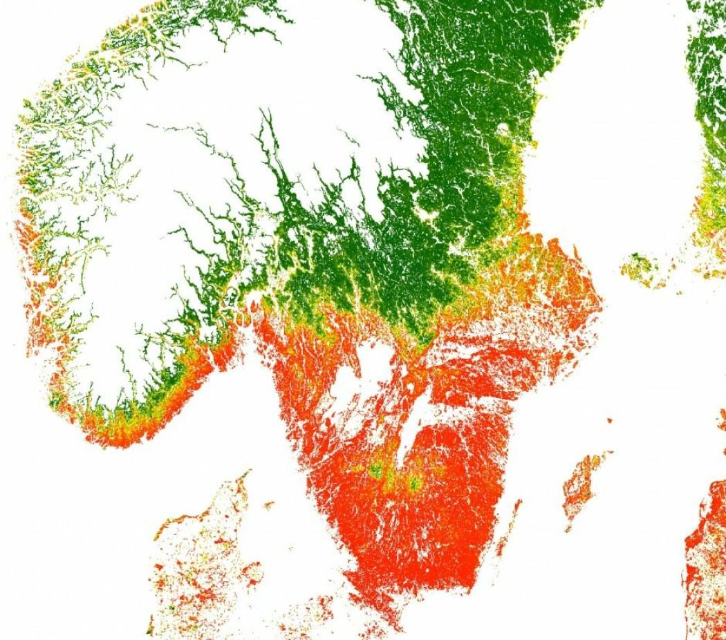 Sannsynligheten for at det finnes flått på en posisjon. Rødt er veldig høy sannsynlighet, mens mørkegrønn er veldig lav. De hvite områdene er ikke medregnet. (Illustrasjon: Kjær et al.)