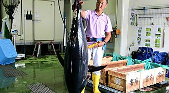 Japanere skal redde den truede tunfisken