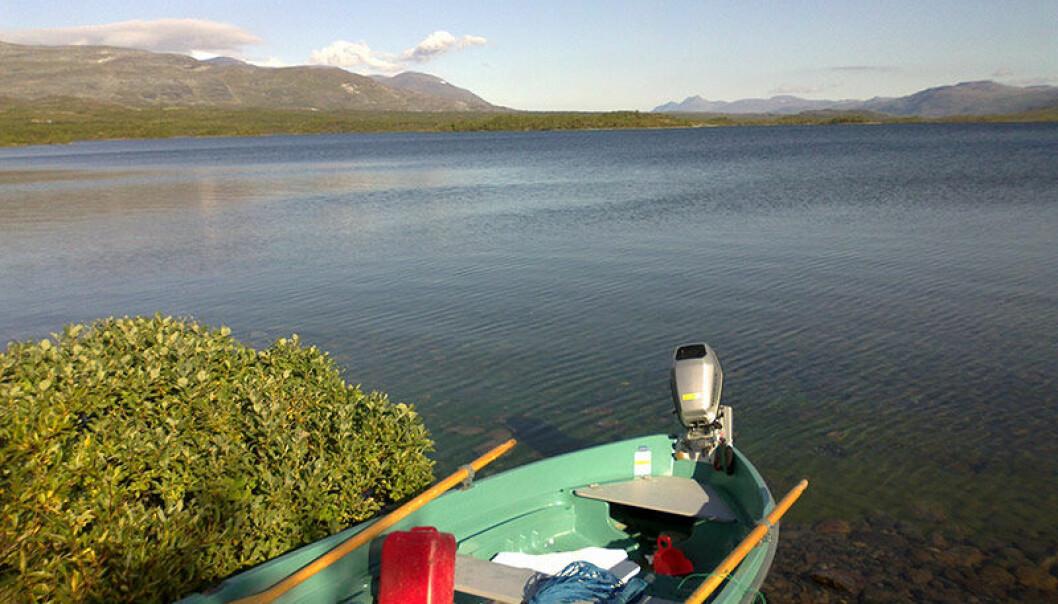 Fiskearter som trivdes i de opprinnelig kalde vannene i nord, som for eksempel i innsjøen Gálggojávri i Troms, må gi tapt for andre og mindre smakfulle arter, som mort, hork og abbor. (Foto: Kimmo Kahilainen, Høgskolen i Innlandet)