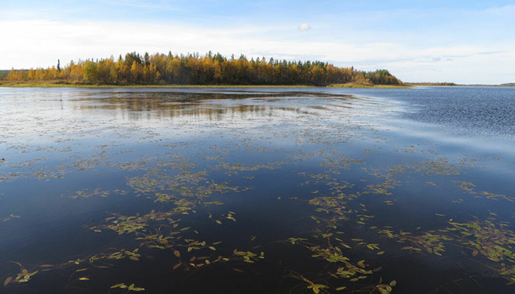 Lake-vaatto er innsjøen Vaatto rett nord for polarsirkelen i Finland. (Foto: Kimmo Kahilainen, INN)