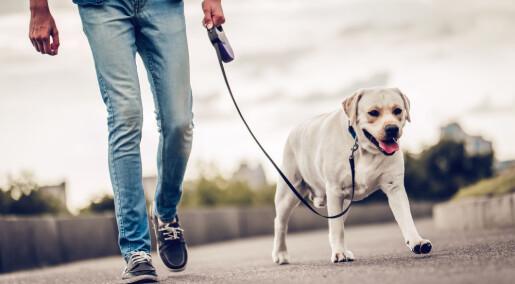 Forsøk på celler: De samme kjemikaliene svekket sædkvaliteten både hos menn og hunder