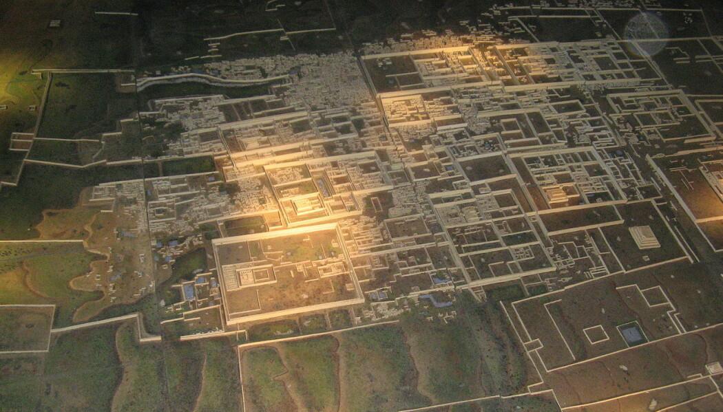 Restene av murene i Chan Chan i dag, sett fra lufta. I denne byen kan det ha bodd mer enn 40 000 mennesker på høyden. Funnstedet for massakren var bare noen kilometer unna byen, nærmere kysten. (Foto: GilCahana, Wikimedia Commons)