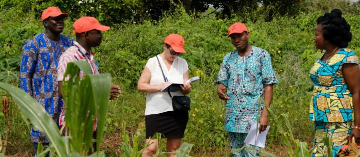 Benin er et av landene i Vest-Afrika som er hardt rammet av den nye skadegjøreren. Seniorforsker May-Guri Sæthre på befaring med kolleger fra UNA. (Foto: Ragnar Våga Pedersen)