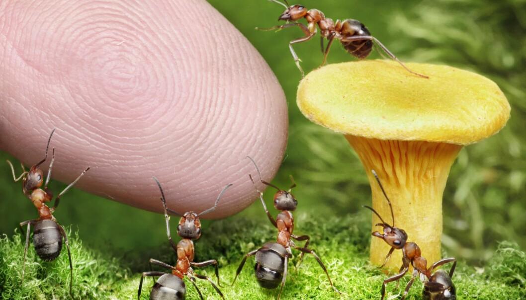 Biologen Stephen Palumbi kaller mennesket «verdens sterkeste evolusjonære kraft». Forskere setter fingeren på hvordan vi påvirker utviklingen hos andre arter. (Illustrasjon: Colourbox)
