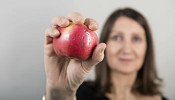 Vi forholder oss annerledes til ødelagt frukt og best før-datoer hjemme og i butikken. Her viser forsker Valerié Almli frem et eple som mest sannsynlig aldri vil bli solgt. (Foto: Jon-Are Berg-Jacobsen / Nofima)
