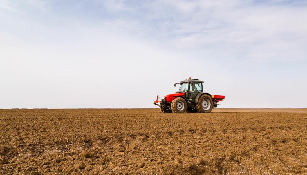 Bønder kan bruke avføring og fôrrester fra fisk når de gjødsler jordene sine for at kornet skal vokse. Nå har forskere ved NIBIO sett på ulike måter å behandle fiskeslammet på, og kommet fram til hva som er best og mest lønnsomt for kornet og bonden. (Foto: Shutterstock / NTB scanpix)