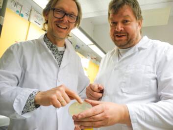 Pål Johnsen og Klaus Harms. (Foto: Elisabeth Øvreberg)