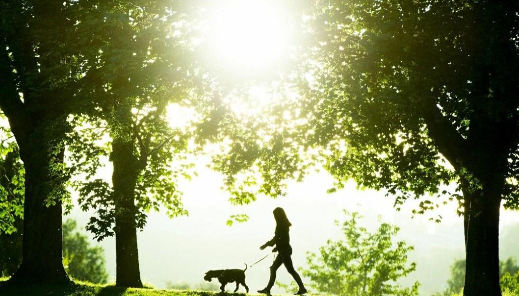 Vitamin D både kan komme fra matvarer, solskinn og vitaminpiller.  (Foto: Vegard Wivestad Grøtt / NTB scanpix)