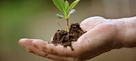 Fryser ned planter og data i 500 år