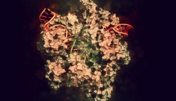 CRISPR Cas9 kan klippe DNA der vi måtte ønske det, men kan i praksis være vanskelig å kontrollere. Nå har forskerne funnet en stopp-knapp.  (Illustrasjon: molekuul_be / Shutterstock / NTB scanpix)