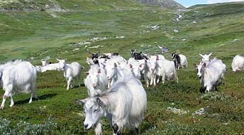 Mer av Norge kan bli beitemark