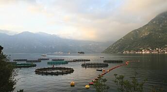 Strengere regler gjør fiskeoppdrett mer bærekraftig