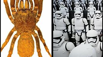Ny edderkoppslekt oppkalt etter stormtroppene i Star Wars