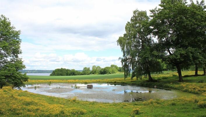 Gårdsdam ved Hovinsholm gård på Helgøya. (Foto: Øyvind Holmstad [CC BY-SA 3.0 (https://creativecommons.org/licenses/by-sa/3.0)]