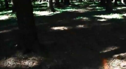 Skogsroboten skal måle og telle trær