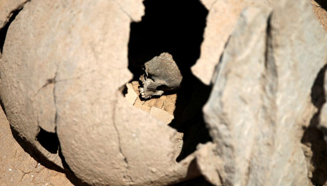 Et barn som er begravet i en krukke. Akkurat denne begravelsen skjedde i antikkens Hellas.  (Foto: Alkis Konstantinidis/Reuters/NTB Scanpix)