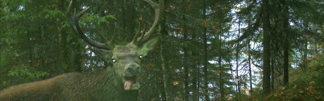 Viltbloggen: Blinkskudd fra naturen