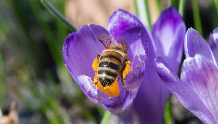 Slik kan du hjelpe insektene med hotell, blomster og død ved