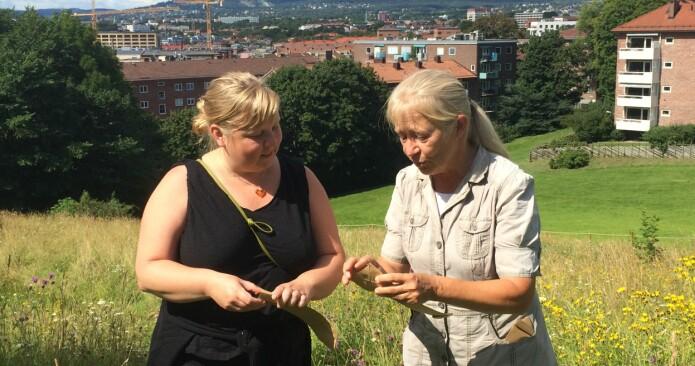 Botaniker og universitetslektor Kristina Bjureke (til høyre) samler frø på en eng i Oslo sammen med Gro Hilde Jacobsen fra Bymiljøetaten, Oslo kommune. (Foto: Honorata Gajda)