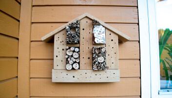 Et insekthotell kan gjerne ha åpninger med forskjellig diameter. (Foto: Hallvard Elven / Naturhistorisk museum)