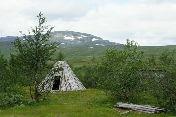 Fra det sørsamiske kulturlandskapet. Gamme ved Stekenjokk-vegen, øst for Røyrvik. I bakgrunnen ser vi fjellet Sipmehketjahke på grensa mellom Norge og Sverige. (Foto: Asbjørn Kolberg)