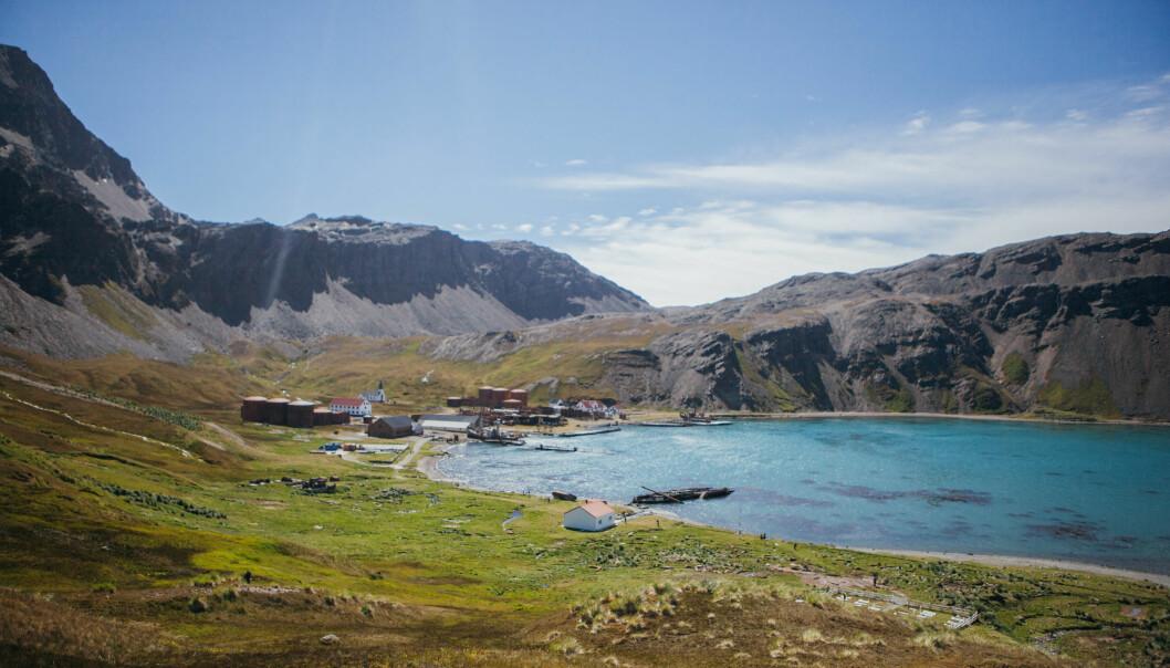 Grytviken på øya Sør-Georgia i Sør-Atlanteren var en hvalfangststasjon som ble grunnlagt i 1904. Stasjonen, som var i drift i over femti år, er i dag en forskningsstasjon og museum. (Foto: Oda Linnea Brekke Iden / Havforskningsinstituttet)