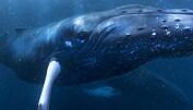 Velkommen til hvalenes forunderlige verden