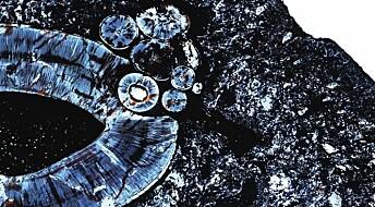 Fant 255 millioner år gammel svulst