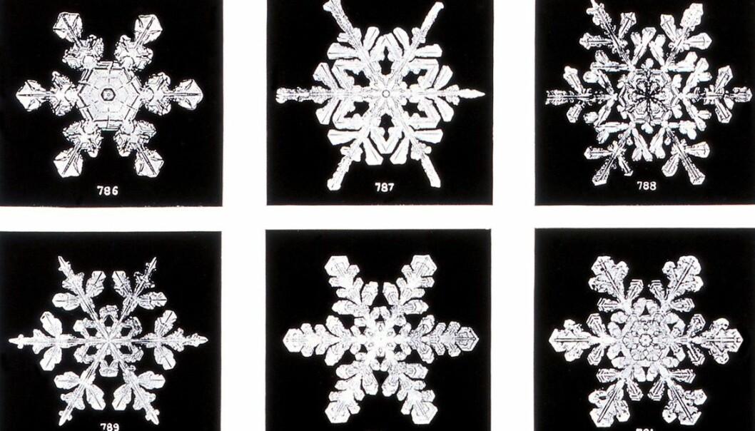 Bildene Wilson Bentley tok av snøkrystaller på slutten av 1800-tallet har fått mye kritikk, men ingen har betvilt at fnuggene som daler ned fra himmelen virkelig har seks kanter. (Foto: Wilson Alwyn Bentley / Science Photo Library)