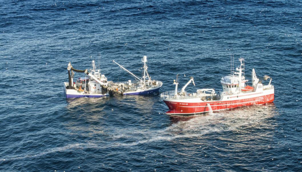 - Fisk som sild og makrell kan ha like lave klimaspor som mange grønnsaker, skriver SINTEF-forsker. (Foto: Per Eide / Samfoto / NTB scanpix)