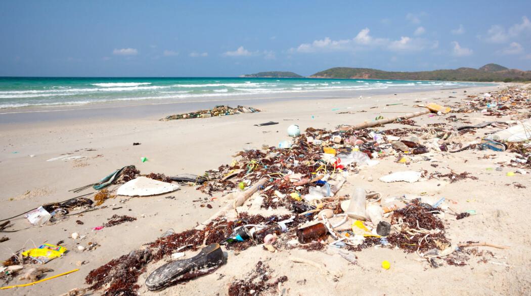 Rester av polyester og annen plast naturen og i fisken vi spiser er et tema i forskningsmagasinet Fram Forum. (Foto: Colourbox)