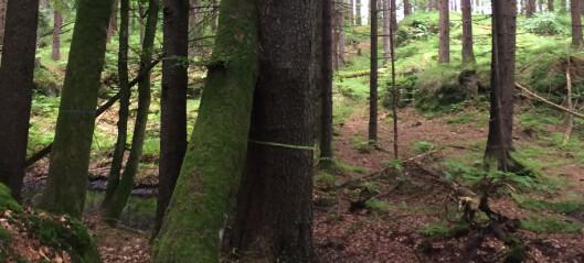 Skogens underjordiske nettverk