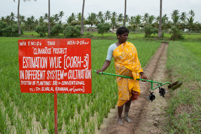 Nye dyrkingsmåter kan gi større avlinger og mindre forbruk av vann. (Foto: Nibio)