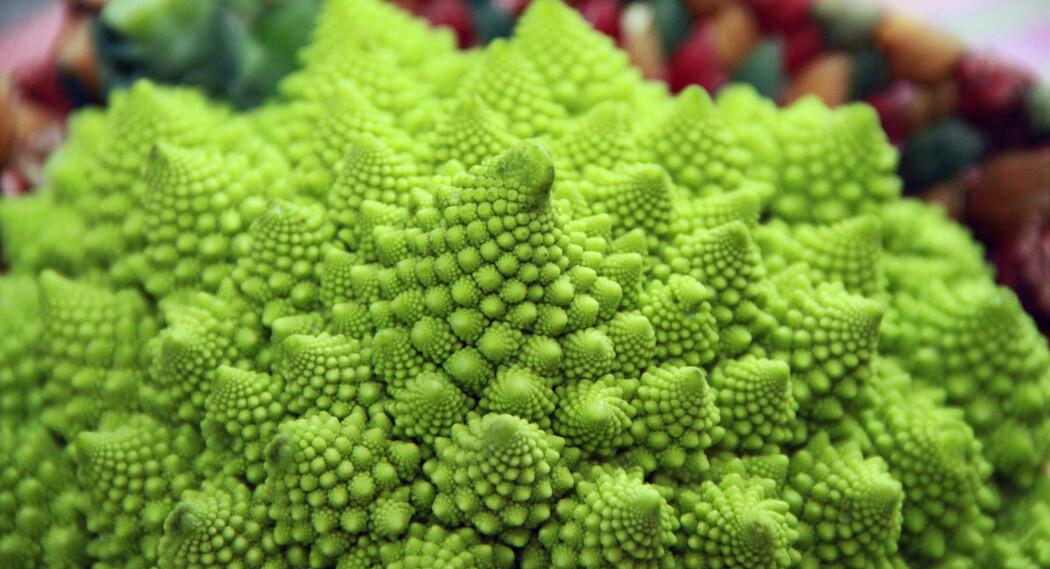Sånn kan det gå når man krysser brokkoli med blomkål: Vi får en fraktalkål. (Foto: Colourbox)